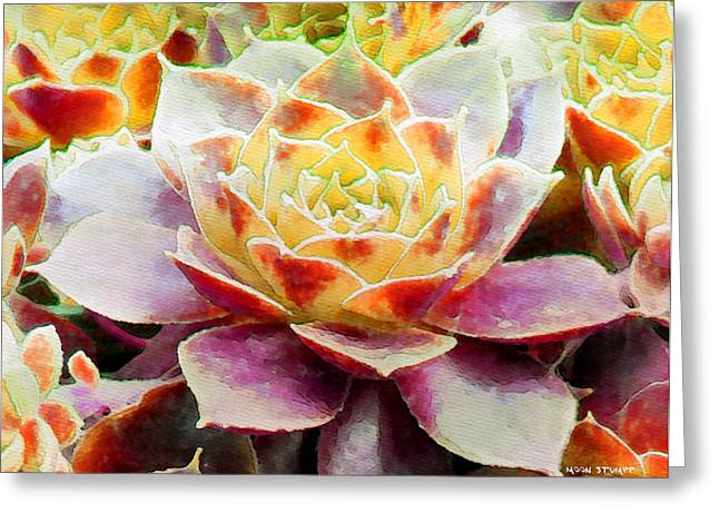 Hens and Chicks Series - Early Morning Quite Greeting Card by Moon Stumpp