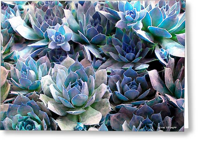 Cacti Digital Greeting Cards - Hens and Chicks series - Evening Light Greeting Card by Moon Stumpp