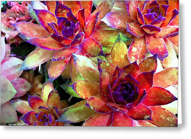 Abstracts Art Photographs Greeting Cards - Hens and Chicks series - Garden Brass Greeting Card by Moon Stumpp