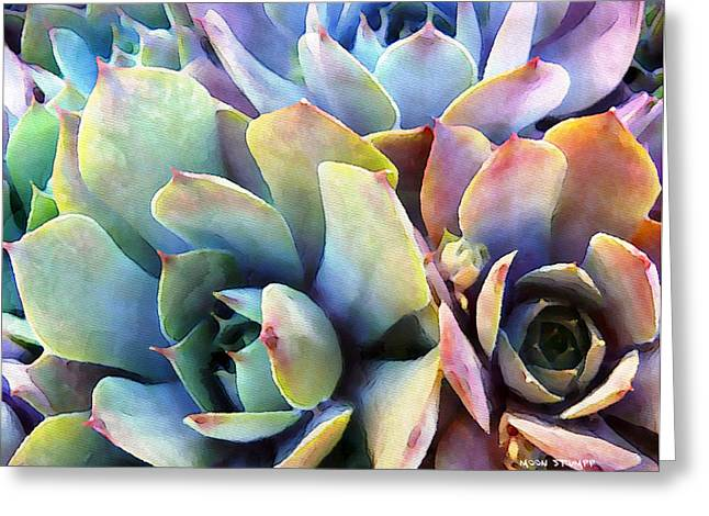 Texture Floral Photographs Greeting Cards - Hens and Chicks series - Soft Tints Greeting Card by Moon Stumpp