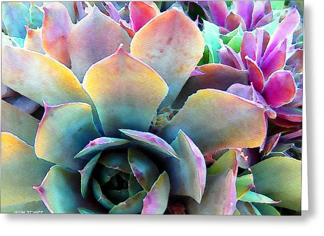 Floral Fine Art Photography Greeting Cards - Hens and Chicks series - Unfolding Greeting Card by Moon Stumpp