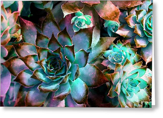Flower Photograph Greeting Cards - Hens and Chicks series - Verdigris Greeting Card by Moon Stumpp