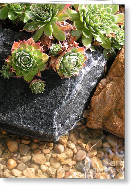 Water Garden Pastels Greeting Cards - Hens and Chicks Succulents Greeting Card by Tracy L Teeter