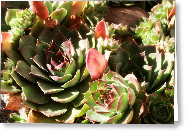 Cellphone Digital Art Greeting Cards - Hens and Chicks Greeting Card by Susan Kinney