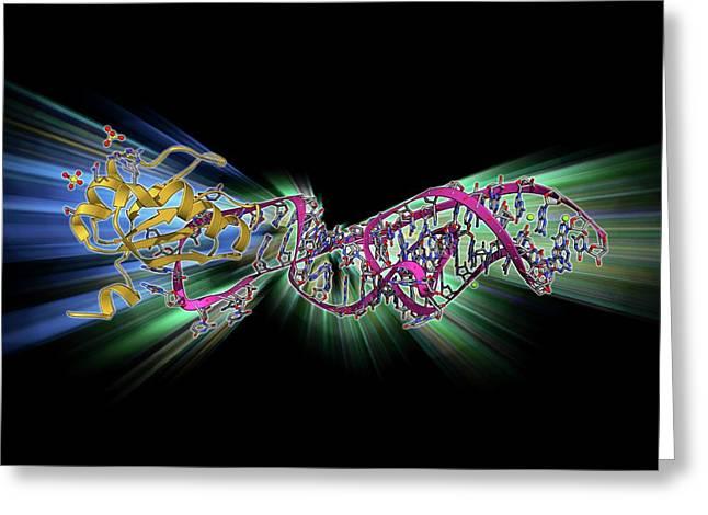 Hepatitis D Virus Ribozyme Complex Greeting Card by Laguna Design