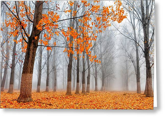 Bulgaria Greeting Cards - Heralds of Autumn Greeting Card by Evgeni Dinev