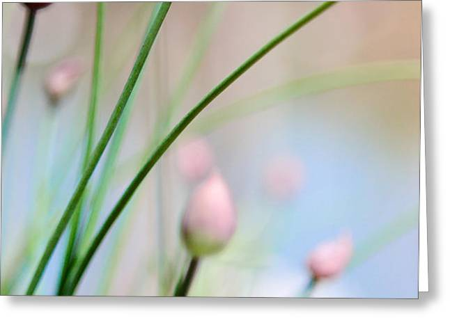 Herb Garden Greeting Card by Kim Fearheiley