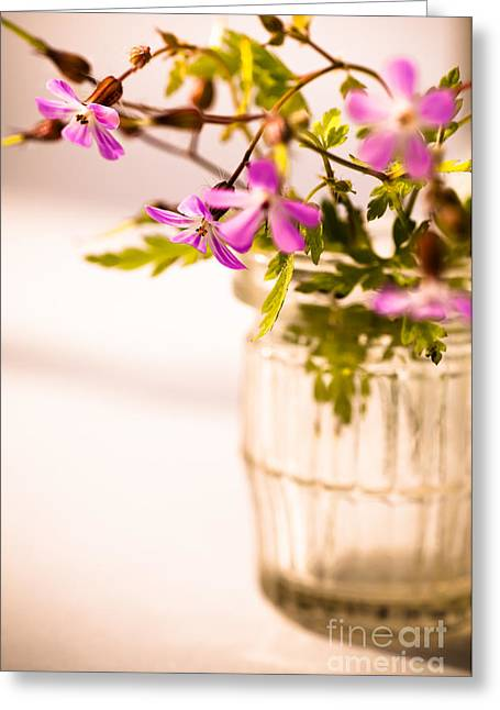 Delicate Flowers Greeting Cards - Herb Robert Posy Greeting Card by Jan Bickerton