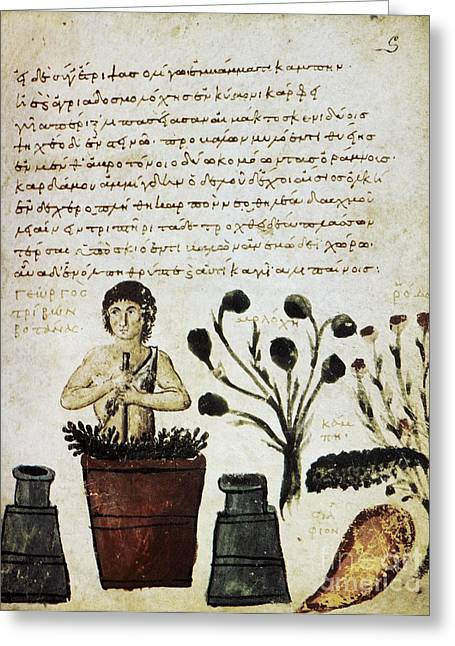 Byzantine Greeting Cards - Herbal Medicine, 10th Century Greeting Card by Spl