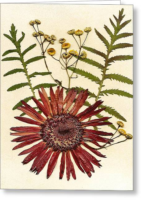 Garden Scene Mixed Media Greeting Cards - Herbal Tansy Garden Greeting Card by Anne Post