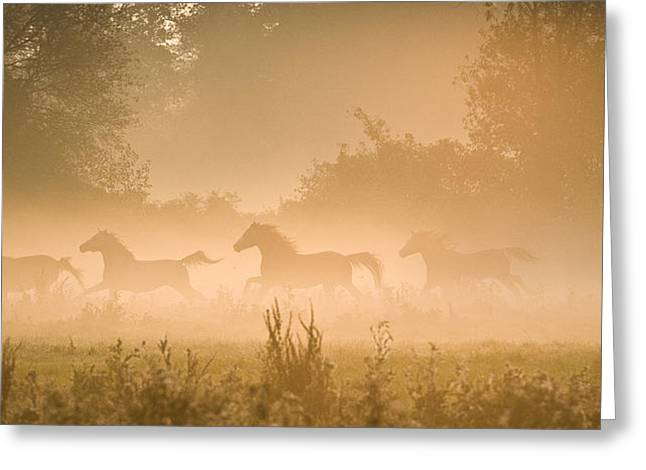 Foggy Day Greeting Cards - Herd in light Greeting Card by Andy-Kim Moeller