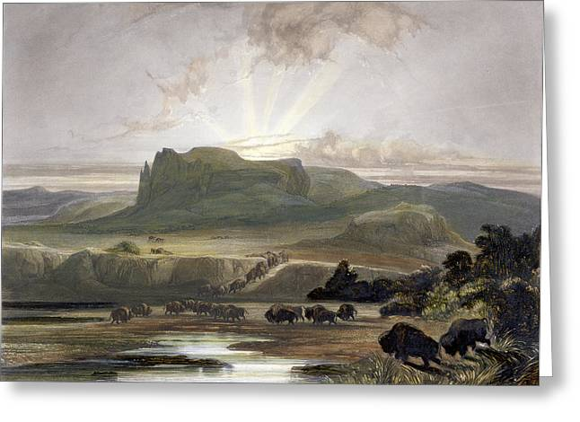 Sunset Drawings Greeting Cards - Herd Of Bison On The Upper Missouri Greeting Card by Karl Bodmer