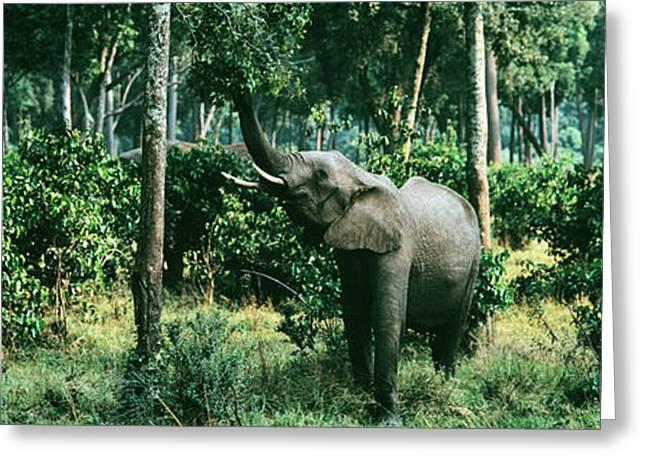 Mara Greeting Cards - Herd Of Elephants Maasai Mara National Greeting Card by Panoramic Images