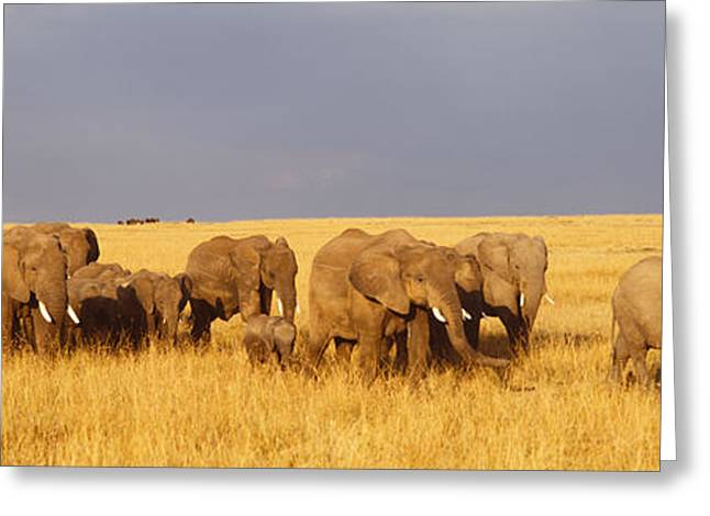Reserve Greeting Cards - Herd Of Elephants On A Grassland, Masai Greeting Card by Panoramic Images