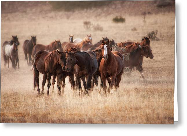 Herd Of Horses In Dry Grasses Of New Greeting Card by Sheila Haddad