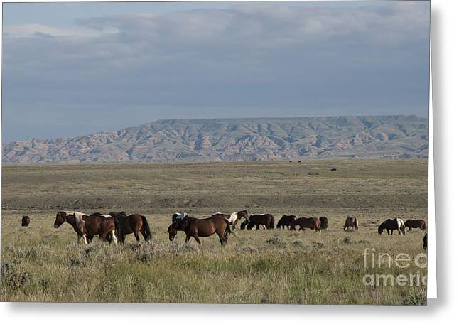 Strong America Greeting Cards - Herd of Wild Horses Greeting Card by Juli Scalzi