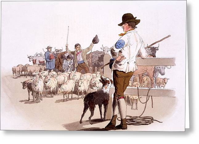 Sheepdog Greeting Cards - Herdsmen Of Sheep And Cattle, From The Greeting Card by William Henry Pyne