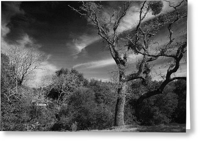 Lafayette Reservoir Greeting Cards - Here As I Stand Greeting Card by Laurie Search
