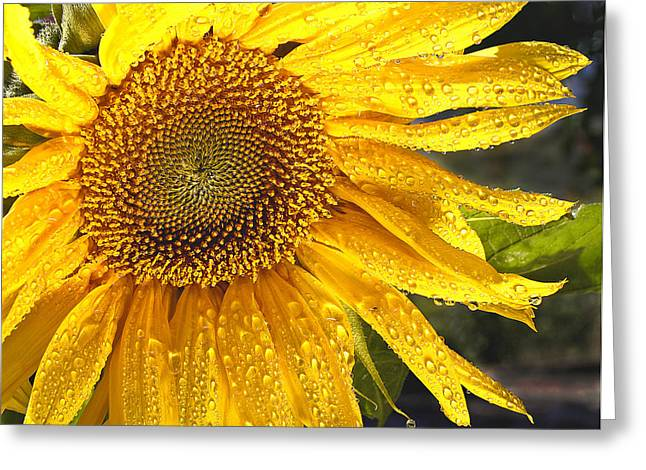 State Flowers Greeting Cards - Here comes the sun Greeting Card by Jean Noren