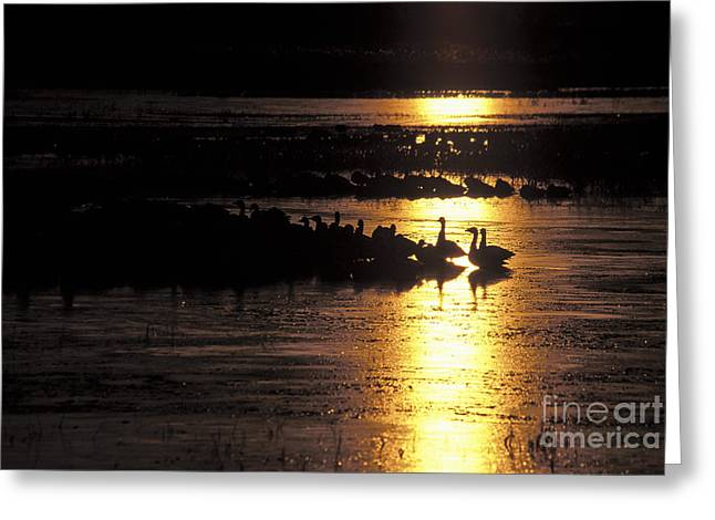 Steven Ralser Greeting Cards - Here comes the sun Greeting Card by Steven Ralser