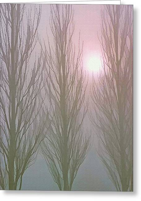 Bare Trees Mixed Media Greeting Cards - Here Comes the Sun -  Winter Poplars in Fog 3 Greeting Card by Steve Ohlsen