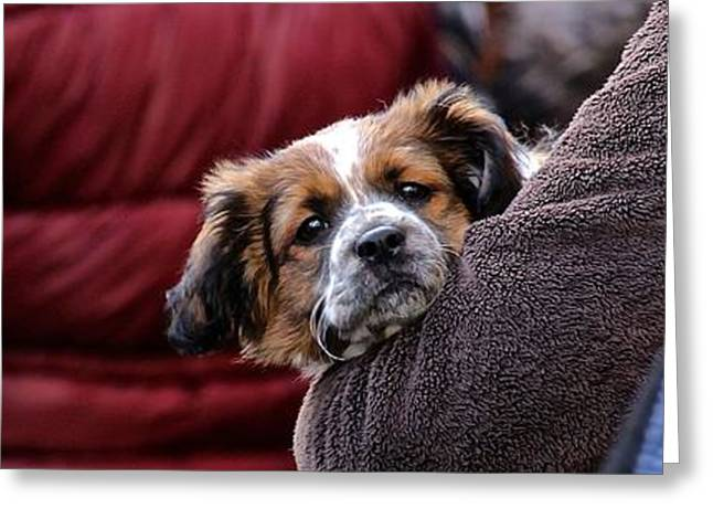 Dogs Digital Art Greeting Cards - Here I Am Greeting Card by David Warrington