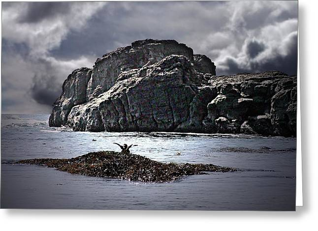 Port Renfrew Greeting Cards - Here I Am Greeting Card by George Cousins
