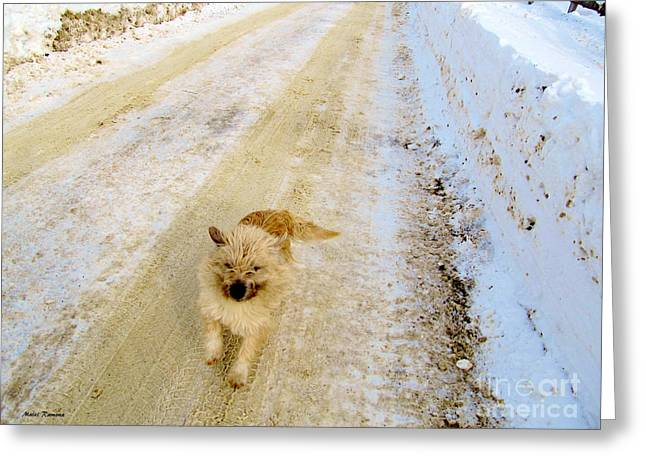 Dog In Snow Greeting Cards - Here I Come Greeting Card by Ramona Matei