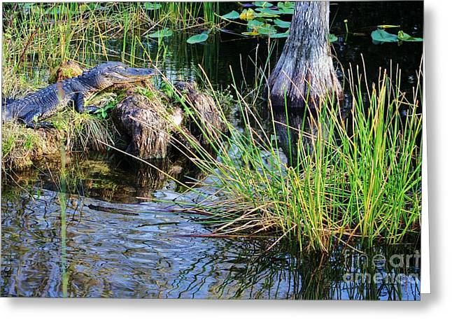 Blue Green Water Greeting Cards - here I rest my head Greeting Card by Chuck  Hicks