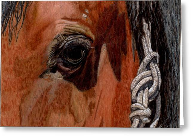 Pencil Drawings Of Pets Greeting Cards - Here is Looking at You Greeting Card by Gail Seufferlein