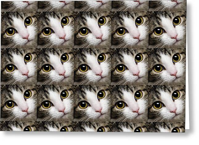 Here Kitty Greeting Cards - Here Kitty Kitty Close Up 25 Greeting Card by Andee Design