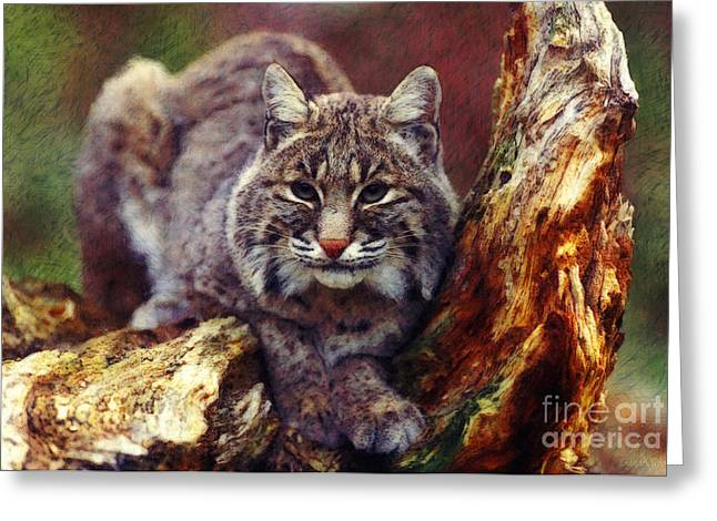 Bobcats Greeting Cards - Here Kitty Kitty Greeting Card by Lianne Schneider
