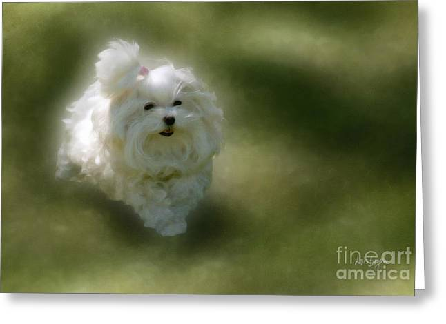 Maltese Dogs Greeting Cards - Here She Comes Greeting Card by Lois Bryan