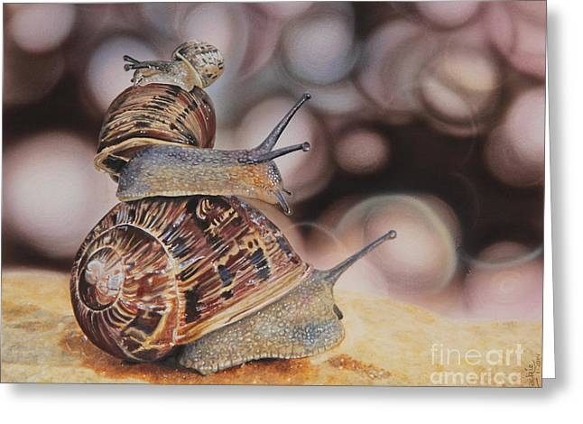 Shell Texture Greeting Cards - Here we go Greeting Card by Jackie Mestrom