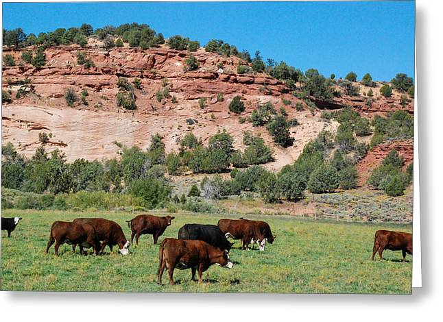 Geobob Greeting Cards - Hereford cattle and green pastures with red rocks in Johnson Canyon near Kanab Utah Greeting Card by Robert Ford
