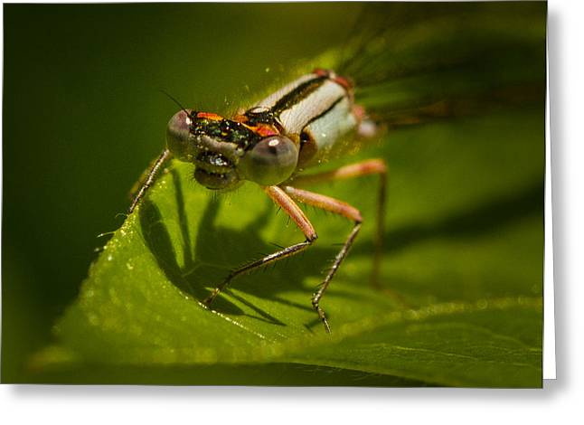 Insect Control Greeting Cards - Heres Looking at You Greeting Card by Jean Noren