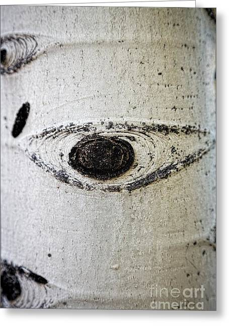 Quaker Photographs Greeting Cards - Heres Looking At You Greeting Card by Jon Burch Photography