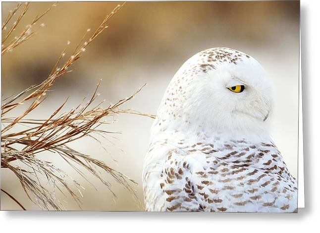 Here's Looking At You Greeting Card by Vicki Jauron