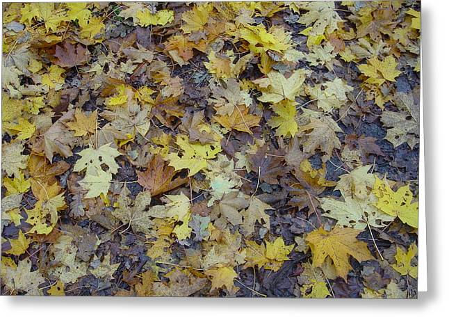 Natuur Greeting Cards - Herfstbladeren Greeting Card by Ton Bocxe