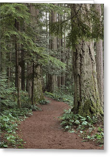 Old Growth Greeting Cards - Heritage Forest Greeting Card by Randy Hall
