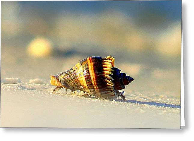 Zoology Greeting Cards - Hermit Crab  Greeting Card by Debra Forand