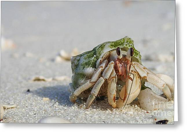 Hermit Crab Greeting Card by Hannes Cmarits