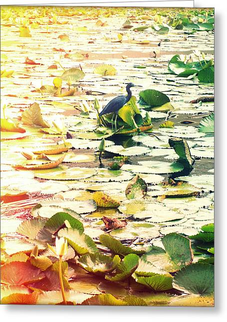 Lilly Pad Greeting Cards - Heron Among Lillies Photography Light Leaks Greeting Card by Chris Andruskiewicz