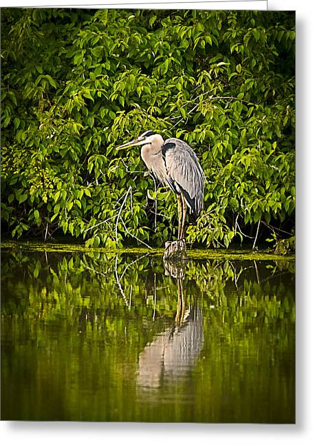 Ohio Pyrography Greeting Cards - Heron at Rest Greeting Card by Shirley Tinkham