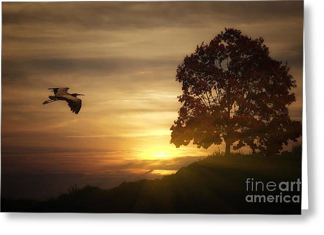 Sundown Framed Prints Greeting Cards - Heron At Sunset Greeting Card by Tom York Images