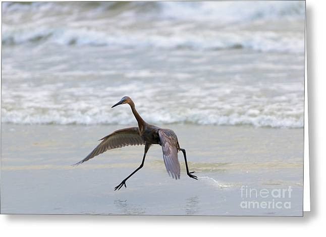 Wading Bird Greeting Cards - Heron Ballet Greeting Card by Mike  Dawson