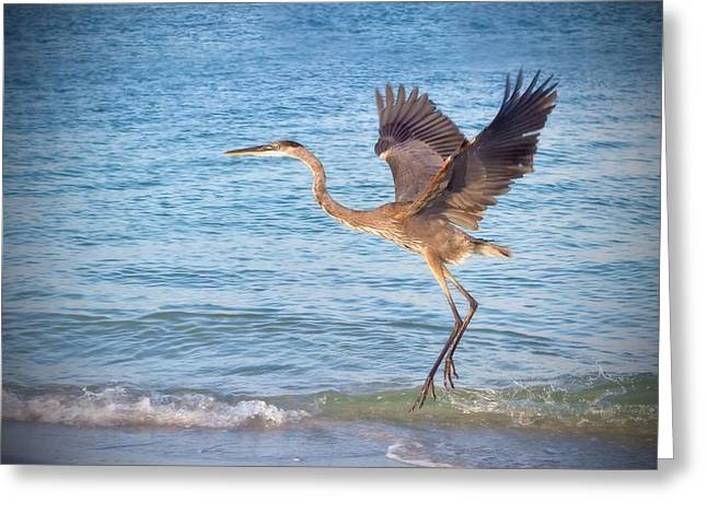 Toy Boat Greeting Cards - Heron Boca Grande Florida Greeting Card by Fizzy Image