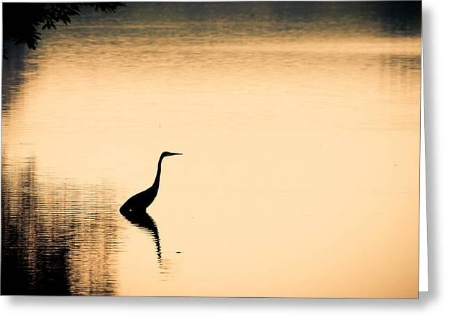 Feeding Birds Greeting Cards - Heron Fishing at Dawn Greeting Card by Jeff Mollman