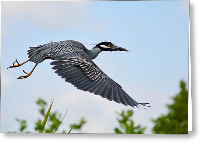 Birds Of A Feather Greeting Cards - Heron Flight Greeting Card by Laura  Fasulo