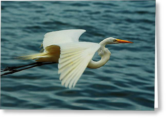 Gars Pyrography Greeting Cards - heron I Greeting Card by Jose Augusto Belmont
